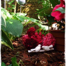 kolejny zakątek w moim ogrodzie, tym razem z hortensją