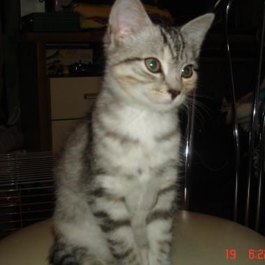 kotka-AMI  jest fajniutka,domatorka..............