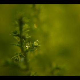 Zielono...