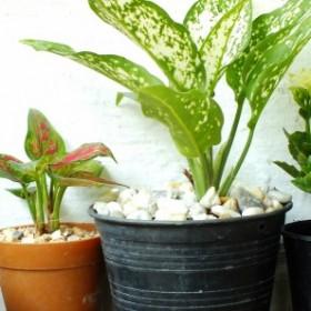 Czy rośliny doniczkowe mogą zagrozić naszemu zdrowiu?