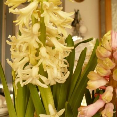...............i troszkę wiosny w domu................