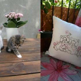 Koty nie tylko marcowe.