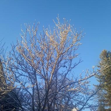 ................i drzewa bielą udekorowane............