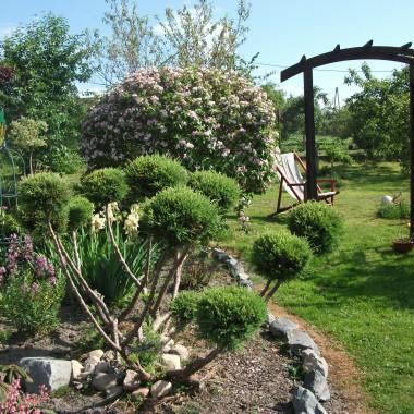 ogrod majowo-czerwcowy :)) różności