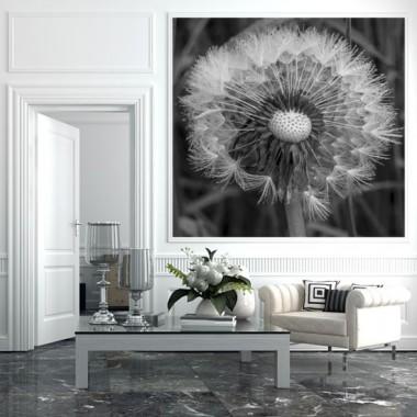 Czarno-biała fototapeta z motywem dmuchawca.