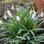 Pozostałe, Wiosna - Kwitną pierwsze kwiaty