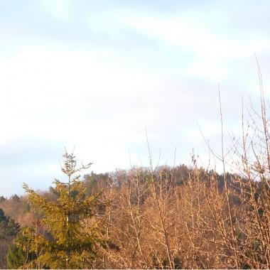 .............i w dali jesienny las.................