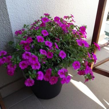 ... i inne kwiaty też.
