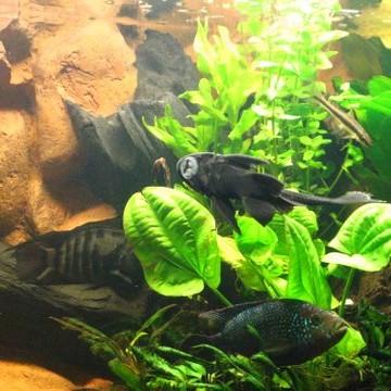 Akwarium Deccoria Pl