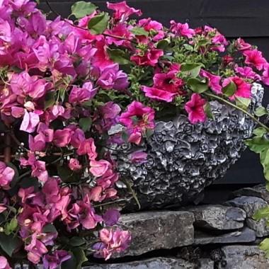 Dekoracje i ozdoby do ogrodu Kobea Ogrody i Bruki Produkcja
