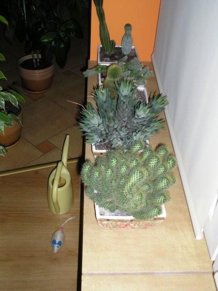 Rośliny, Rośliny