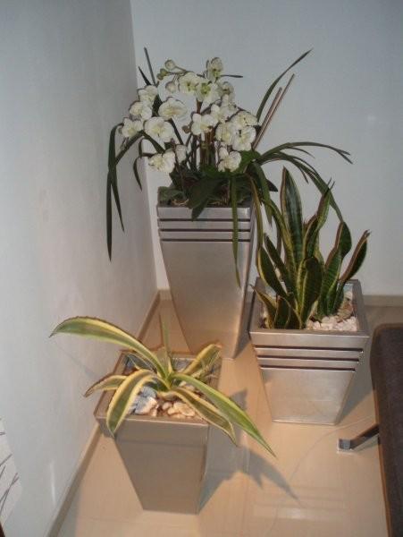 Salon, salon;) - mini plantacja!