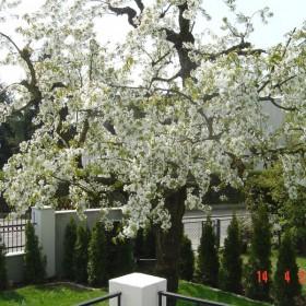 wiosna,ogrodek