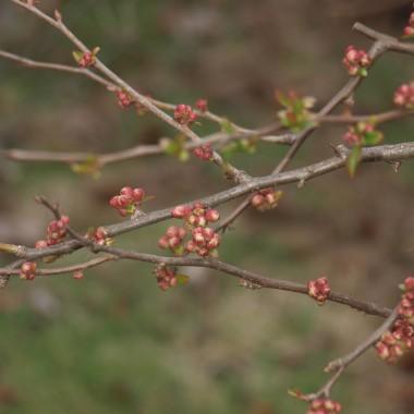 Przed tygodniem na osiedlach zakwitły krzewy forsycji, więc poszliśmy sprawdzić co jeszcze kwitnie w ogródkach. W domu też zrobiło się wiosennie :)