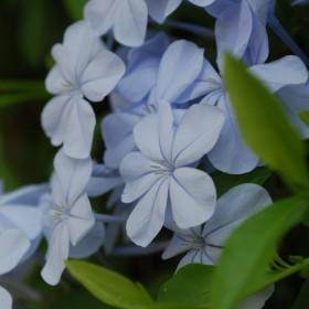 Kwiaty Portugalii