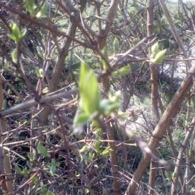 BUDZENIE SIĘ WIOSNY  mój wiosenny ogródek,moje wiosenne roślinki