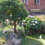 Pozostałe, Moje własne leśne lato... - W oddali ławka , którą mój mąż wykonał osobiście na moją prośbę.