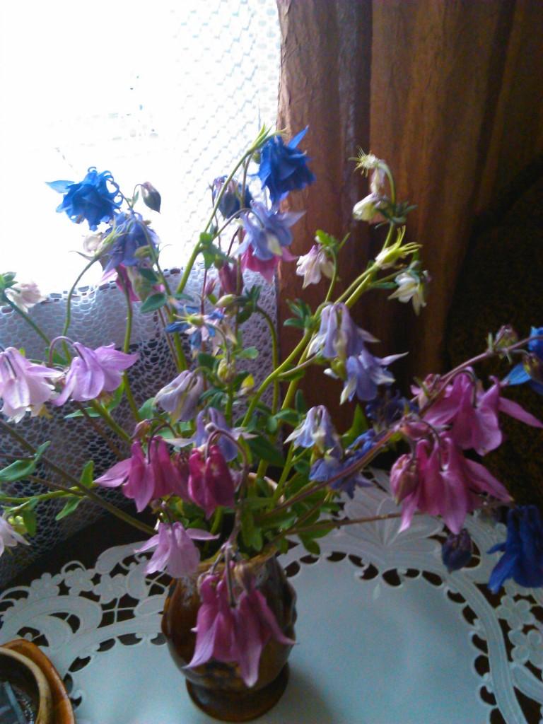Rośliny, bukiety