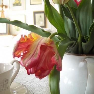 Majowo........... bzowo............ tulipanowo.................