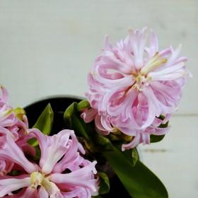 A u mnie w domu Kwitnąco i nawet jesiennie :-)