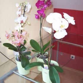 Moje roślinki &#x3B;)