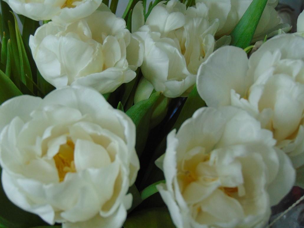 Pozostałe, Wiosennie............ - ..................i tulipany..............