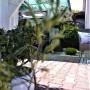 Taras, Nasza altanka w tym roku:)