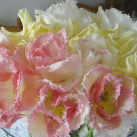 Majowy .........tulipanowy .........zawrót głowy............