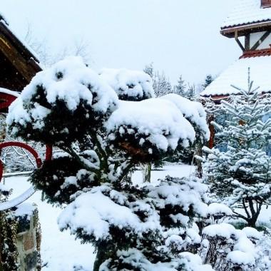 Przyłapałem trochę śniegu w ogrodzie, szkoda że nie było słońca...