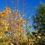 Ogród, Już listopad ............. - ............i złote liście................