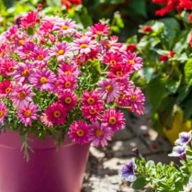 Jak dbać o rośliny balkonowe wiosną?