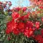 Rośliny, Ogród w Pisarzowicach