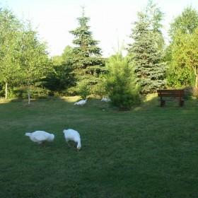 Mój ogród i moje zwierzaczki.