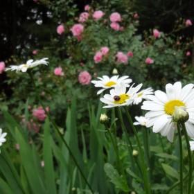 Mój ogród.