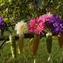 Rośliny, Trochę lata - Aster, kojaży mi z początkiem jesieni