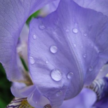 Kwiaty :)