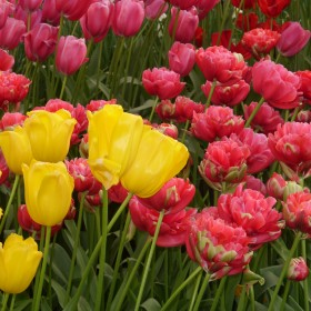 wiosna tuż.... tuż...........