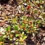 Ogród, Ogród wiosną... - Pierwsze kwiaty azalii