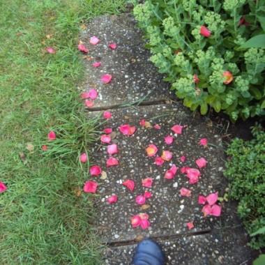Moja sciezka zycia... rozami uslana &#x3B;-)