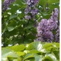 Rośliny, Niekiedy życie..zakreśla koło.....