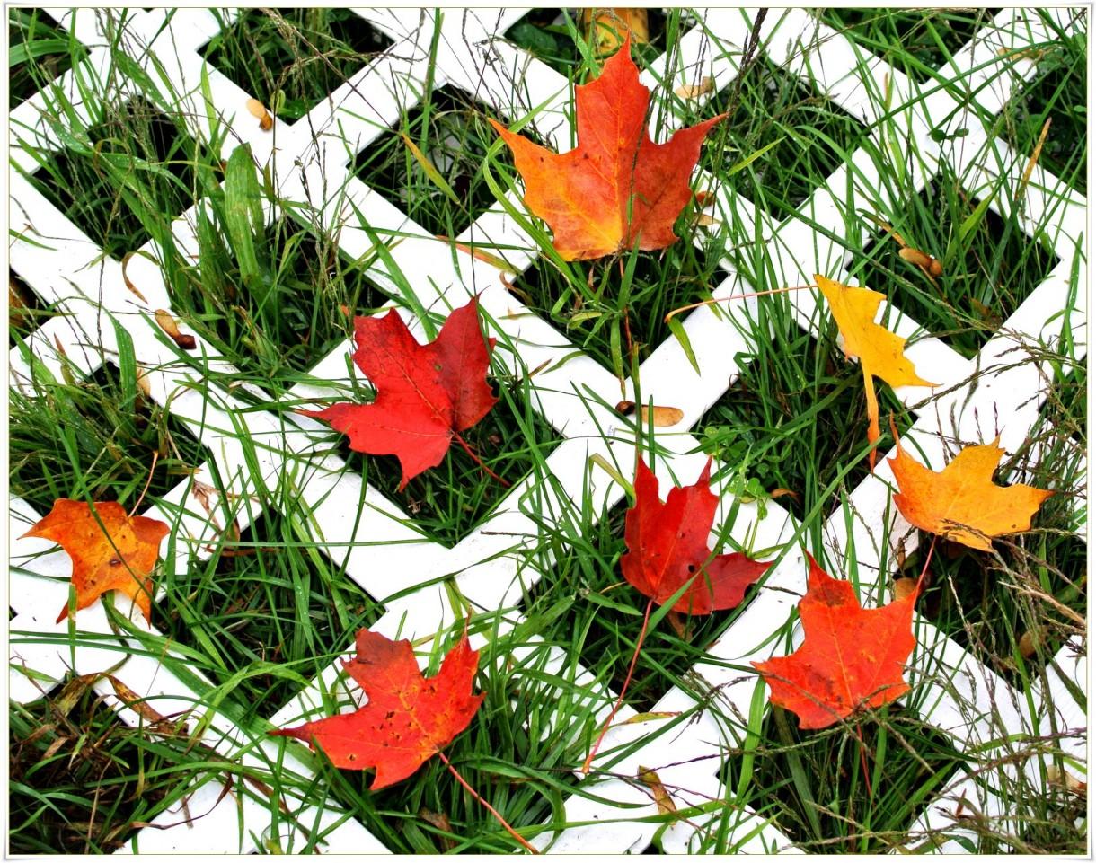 Rośliny, Deszczowo,nastrojowo - ..mozaika...