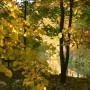 Leśne klimaty, JESIENNY PAPARAZZI