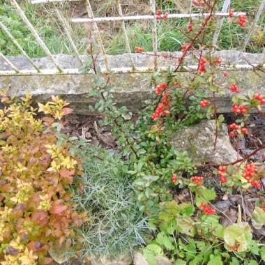 Jesienią w moim ogródku...