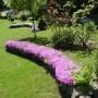Ogród, Majowo-czerwcowy ogród Ewy - Moje ulubione floksy,ale już przekwitają.