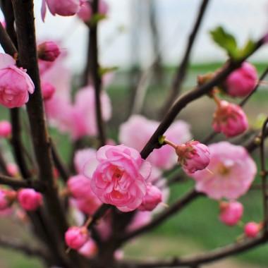 ogrodowe potyczki pod jabłonką :)