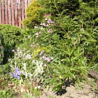Mój mały ogródek