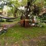 Ogród, Nieśmiała jeszcze jesień - tu był bukszpanowy szpaler- też wycięty