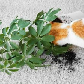 O słabości kota do roślin