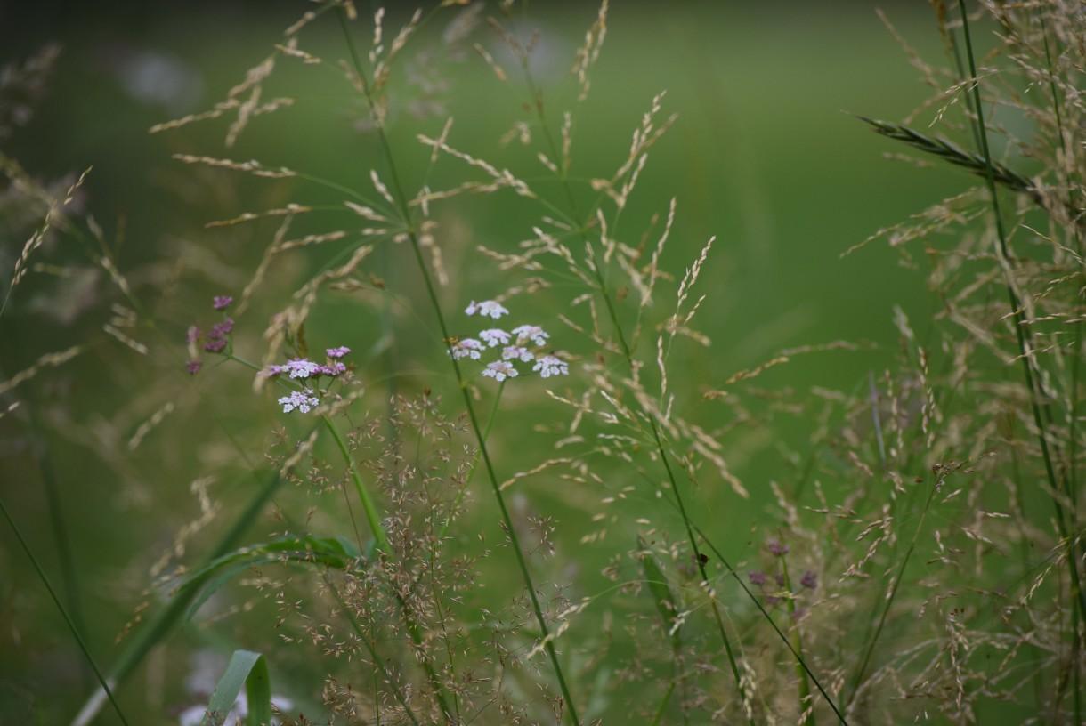 Ogród, W MOIM KRÓLESTWIE KWIATÓW I ZIÓŁ...