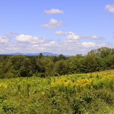 ..po Ogrodzie Botanicznym w Stanie Massachusetts. Lasy,góry...łąki..to krajobraz wokół..Można chodzić z pieskiem po wyznaczonych trasach (rzadko spotykana dogodnosć). Nastrój późnego lata,zapach kwiatów,kolorowo....Upał. Dobrze ,że nie zabrałam Alfika chociaż miał b.smutną minkę i próbował zmienić moją decyzje. Piesek zostaje w domu! Trudno...zbyt gorąco.Lubię takie miejsca ,które położone są na rozległych zielonych przestrzeniach .Można odetchnąć   pełną piersią a wszechobecna dal...daje poczucie swobody..Odpoczywam.